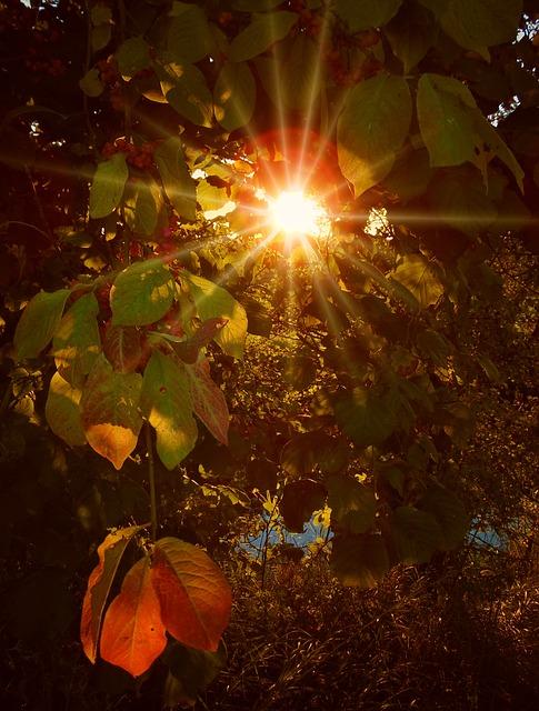 autumn-972733_640