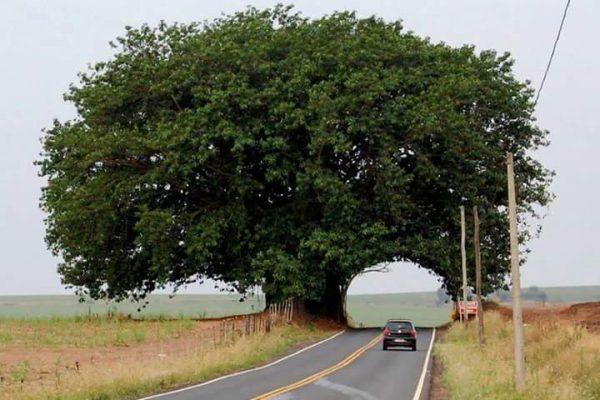 integrierter Baum