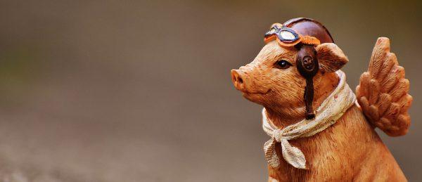 Abenteuer-Schwein