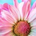 flower-3140492_960_720